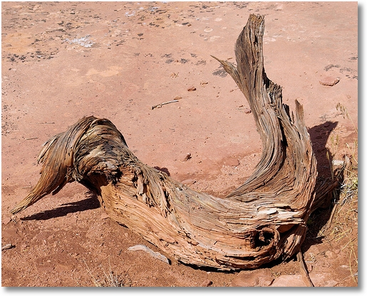 Gnarled and twisted wood at Canyonlands National Park