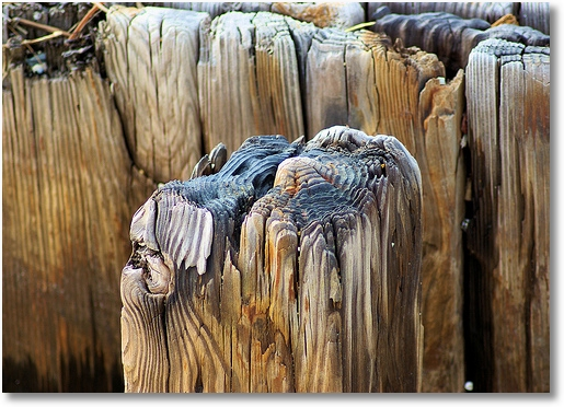 Weathered pilings on the shore of Chesapeake Bay, Norfolk, Virginia