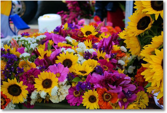 flowers at dane county farmers market on the square