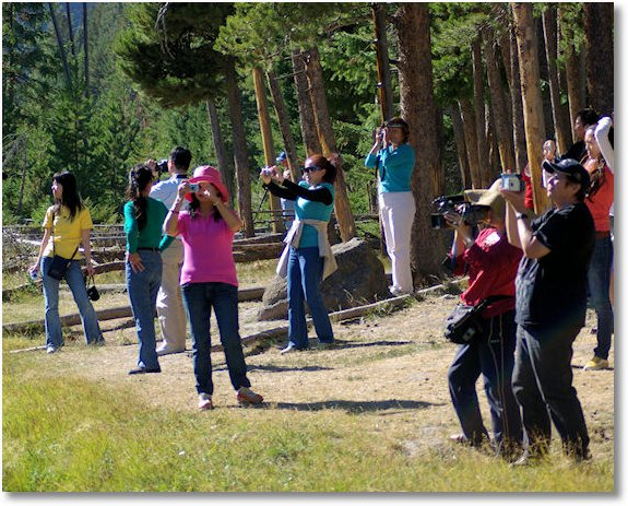 tourists viewing elk along madison river yellowston