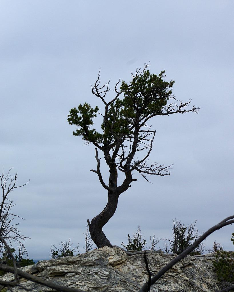 Tree on upper terrace for Terrace trees