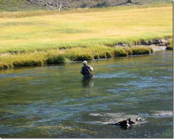 Fly Fisherman, Madison River, Yellowstone National Park, Wyoming, September 13, 2007