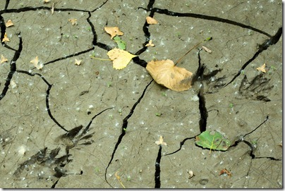 Mud deposited by flood on road at Indian Cave State Park, Nebraska