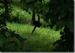 http://hawcreekoutdoors.com/blog/wp-content/uploads/2011/03/image55.png